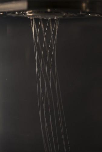 Spider Yarn A 04-07-2016