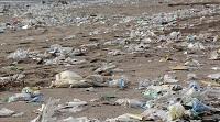 Biodegradation of Plastic Waste