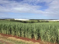 Expert says Bundaberg has biofuel potential