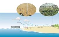 Petrochemicals Bioeconomy Bioplastics
