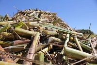 Sugarcane regions urged to look at producing bioplastics, but viability a concern