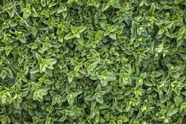 Devan launches range of bio-based fragrances for textiles