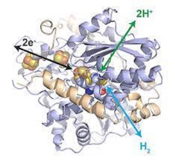 Enzyme system for hydrogen industry