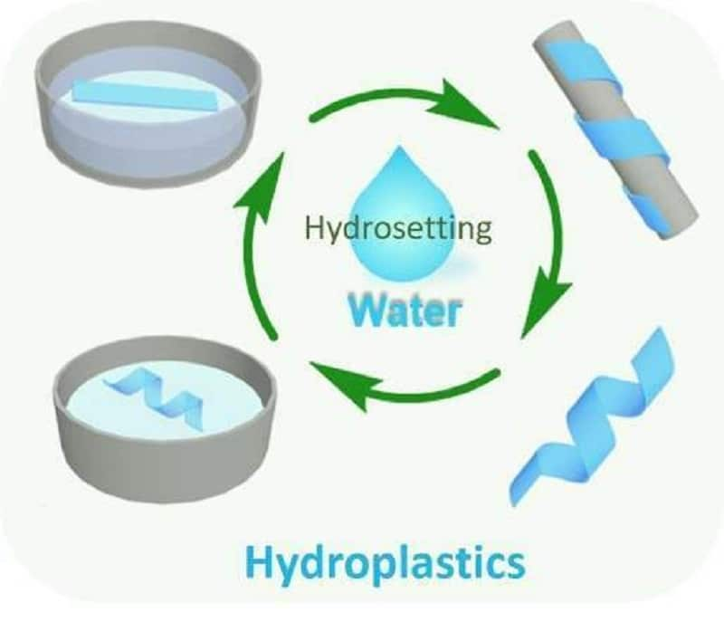 New type of bioplastic based on plant cellulose
